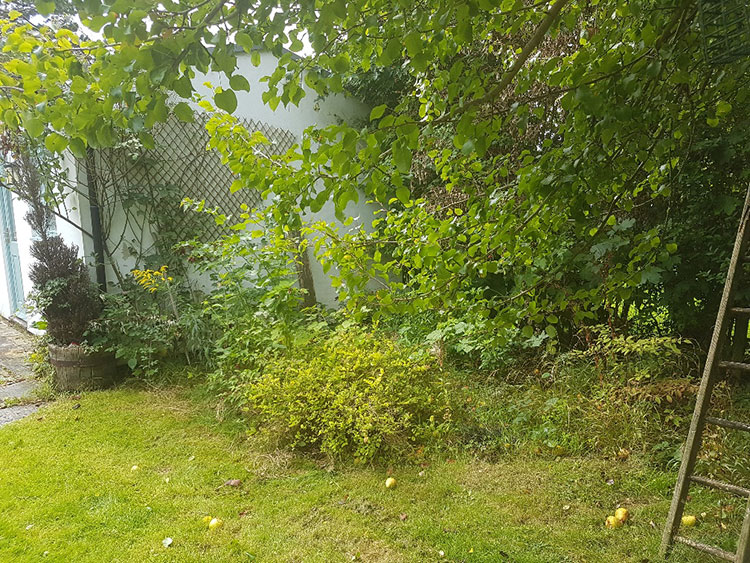 Aird Garden Clearance - BEFORE