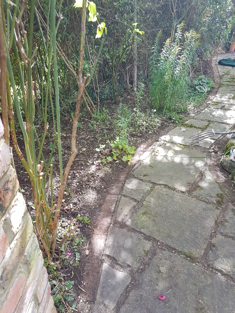 Pathway cleaning - AFTER