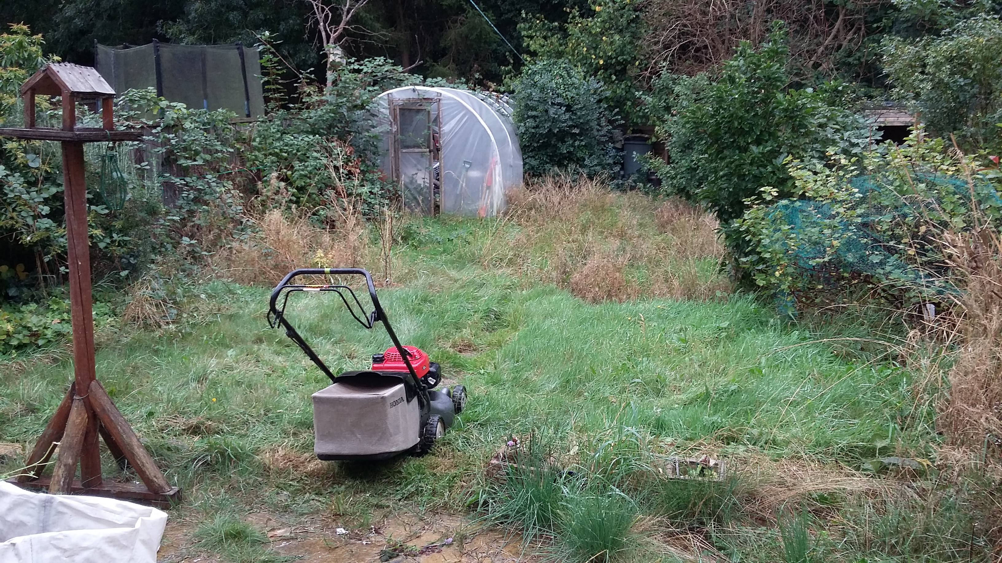 Garden Clearance and Mowing - BEFORE